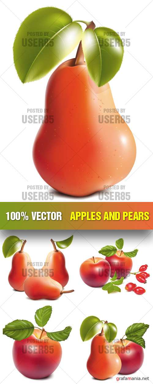 Stock Vector - Apples and Pears