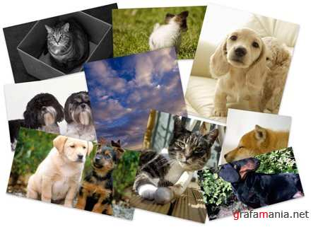 40 Cats and Dogs Wallpapers