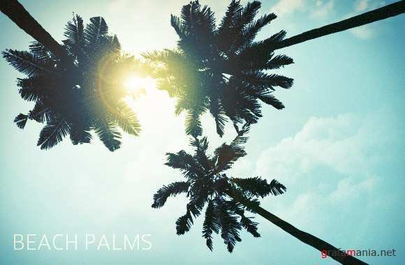 Beach Palms - Brushes Photoshop