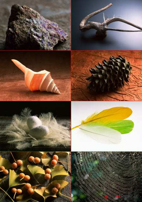 Clipart  – Fascinating Nature