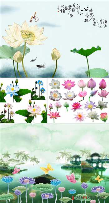 PSD - Lotus illustrations