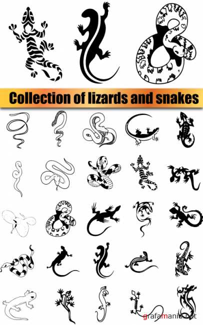 Collection of lizards and snakes