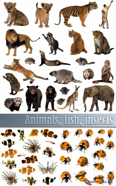 Animals, fish, insects