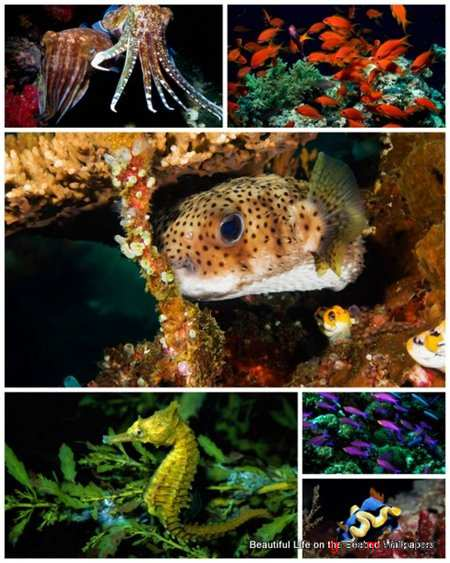 40 Beautiful Life on the Seabed Wallpapers