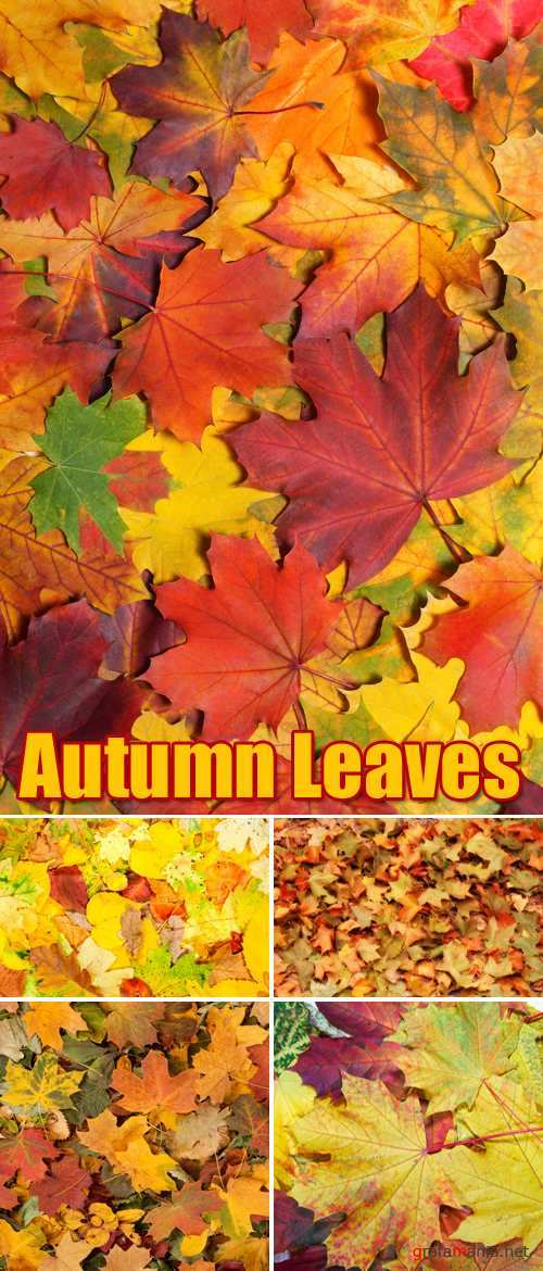 Stock Photo - Autumn Leaves