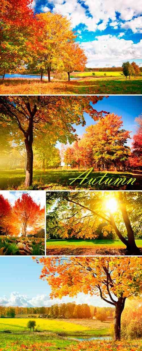 Stock Photo - Autumn Trees