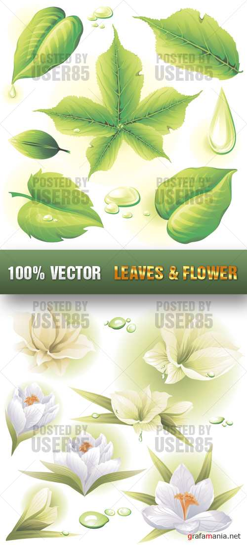 Stock Vector - Leaves & Flower