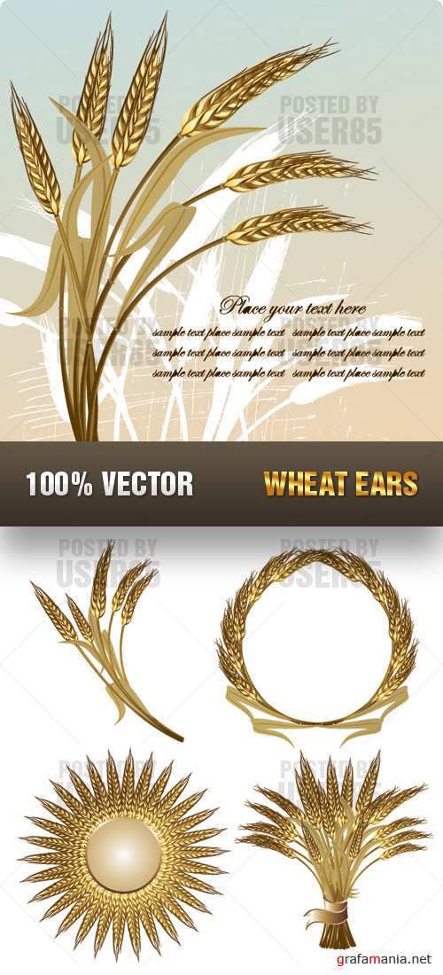 Stock Vector - Wheat Ears