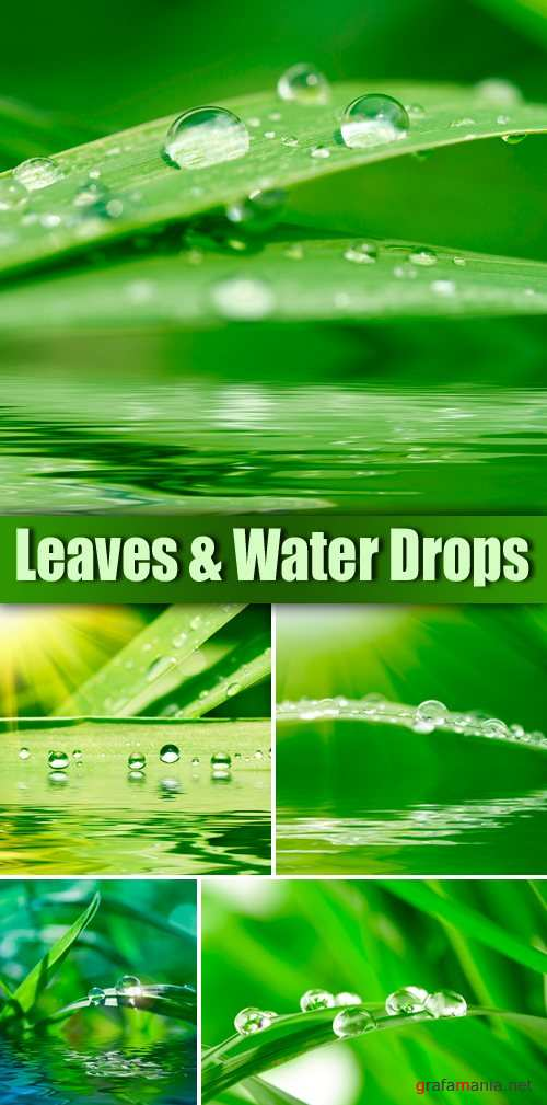 Stock Photo - Leaves and Water Drops