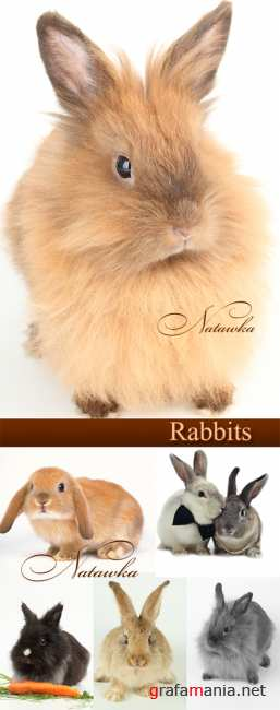 Rabbits - photo