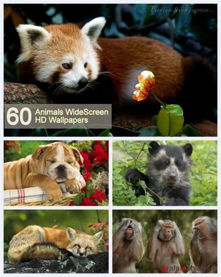 60 Animals WideScreen HD Wallpapers