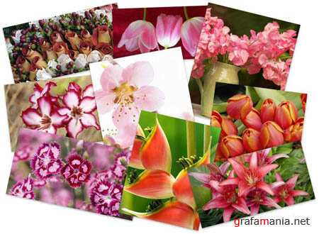 40 Beautiful Flowers Wallpapers