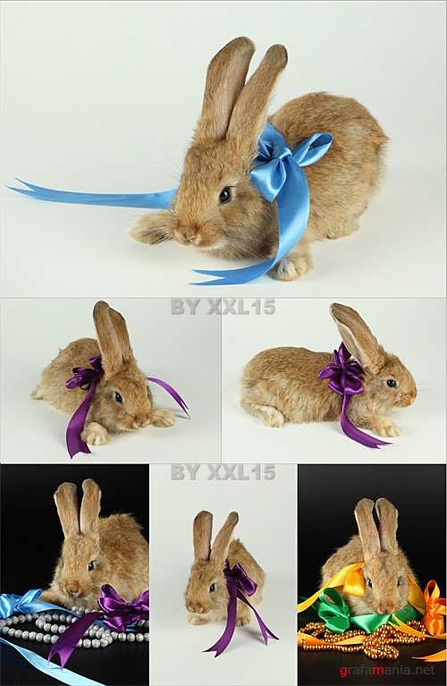 Rabbit with ribbons