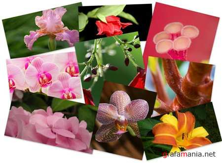 35 Wonderful Flowers Widescreen Wallpapers