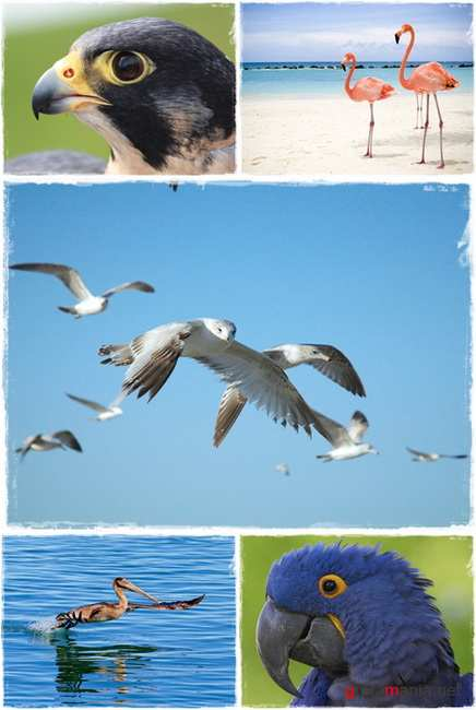 Wallpapers - WUXGA Bird Pack#2