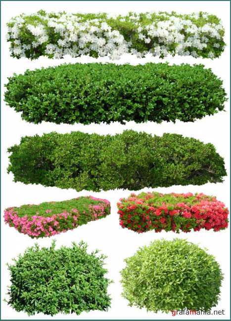 PSD Templates -  Bushes and Plants