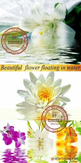 Stock Photo: Beautiful flower floating in water