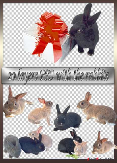 20 layers PSD with the rabbits