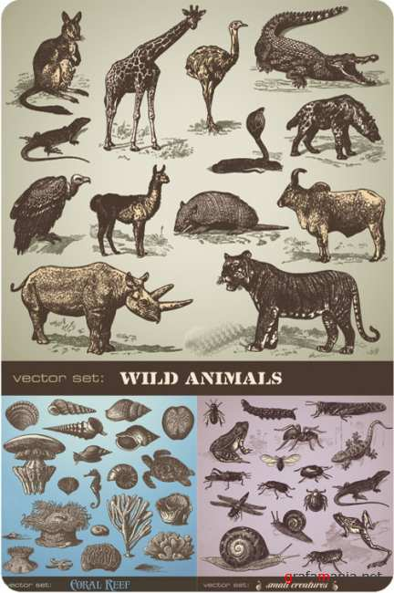 Animals, insects and corral
