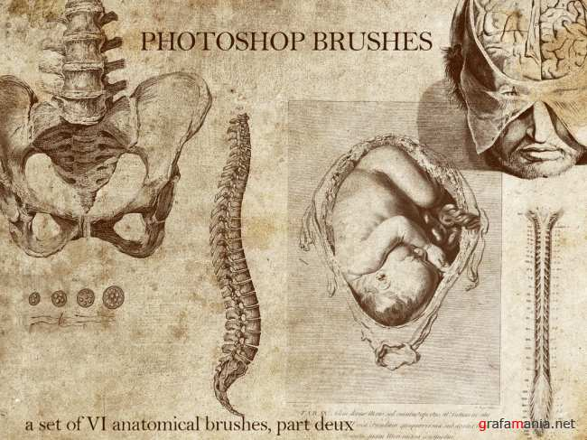 Anatomical brushes by Urbaniumz