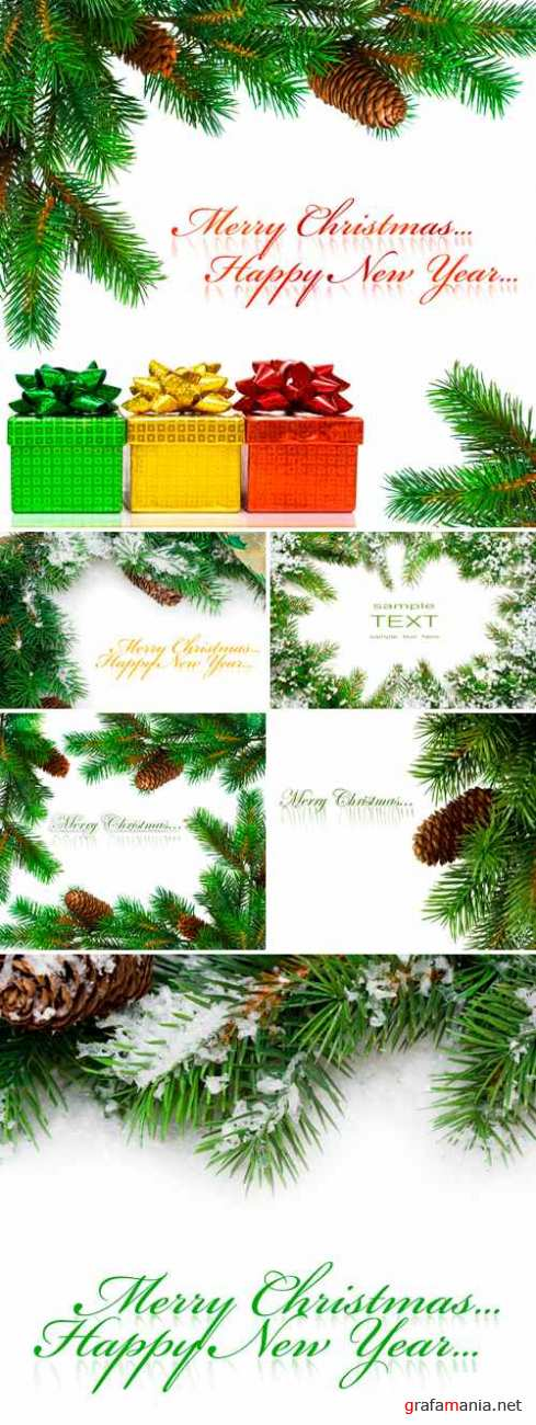 Stock Photo - Christmas Tree Branches