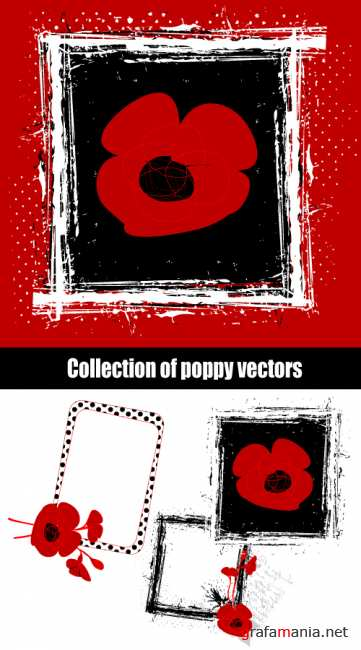 Collection of poppy vectors
