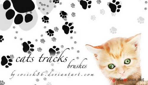 Cats, Kittens, cats paw prints brush collection