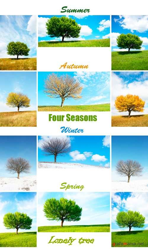 Stock Photo - Four Seasons Tree