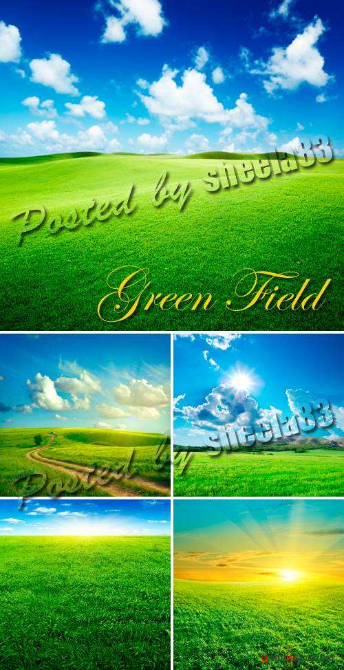 Stock Photo - Green Field