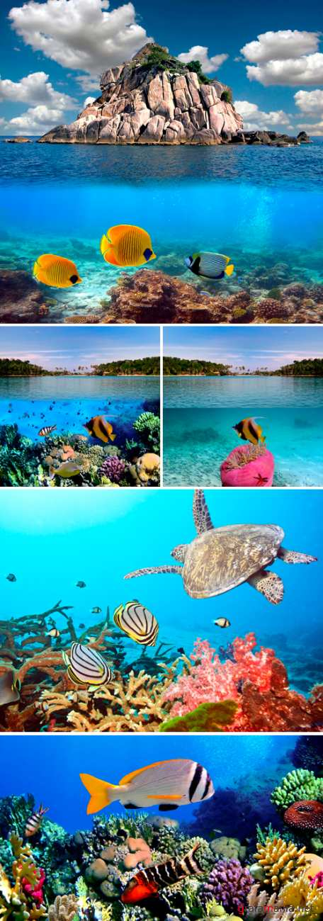Stock Photo - Underwater World