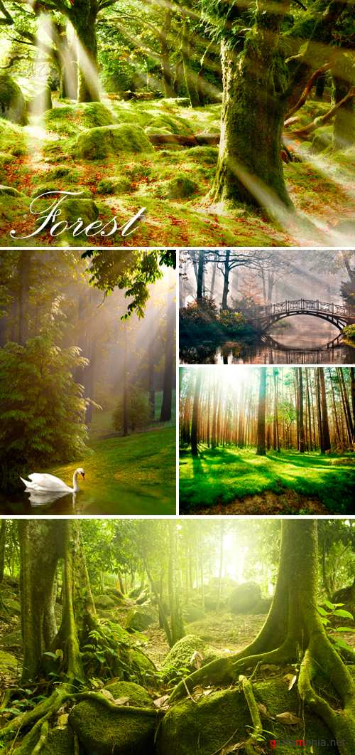 Stock Photo - Misty Forest