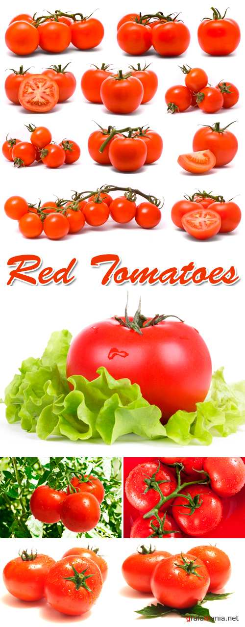 Stock Photo - Red Tomatoes