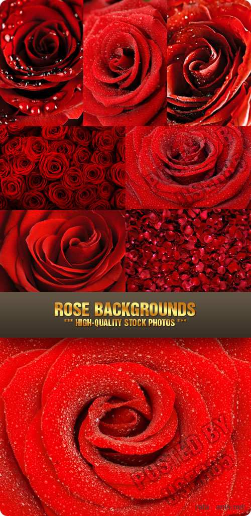 Stock Photo - Rose Backgrounds