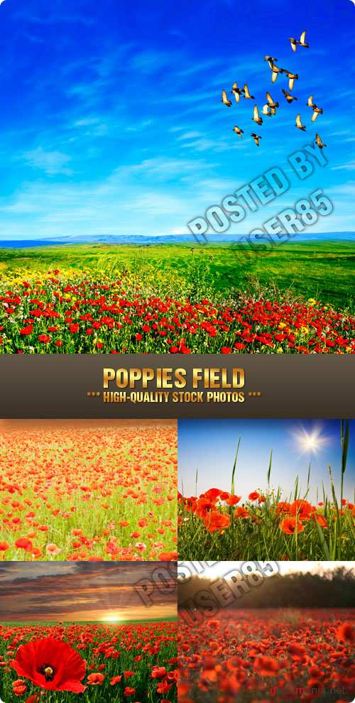 Stock Photo - Poppies Field