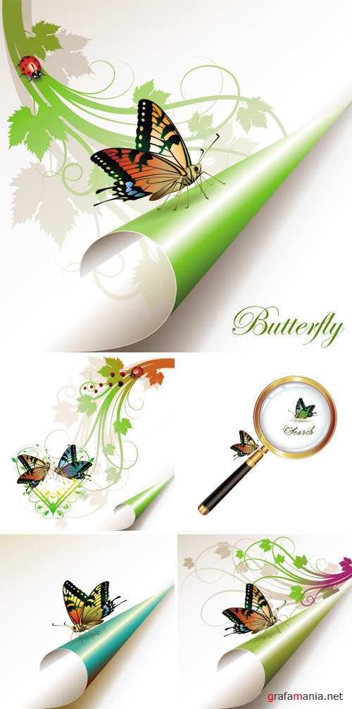 Butterfly Vector 2
