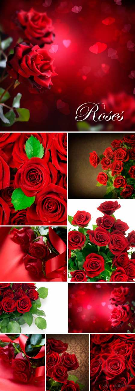 Stock Photo - Red Roses
