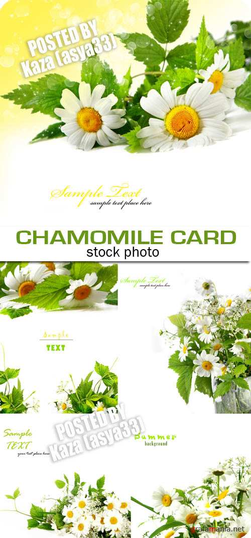 Chamomile cards