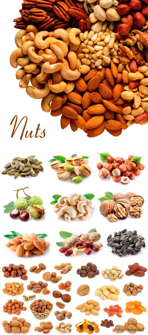 Stock Photo - Nuts