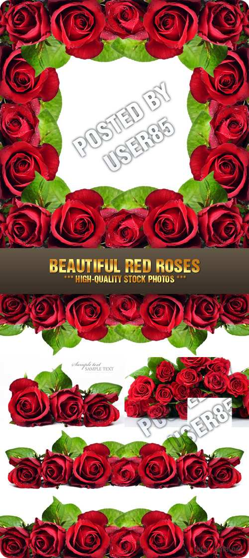 Stock Photo - Beautiful Red Roses