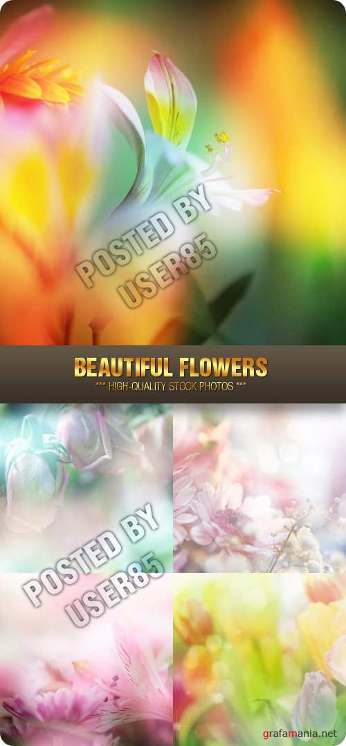 Stock Photo - Beautiful Flowers