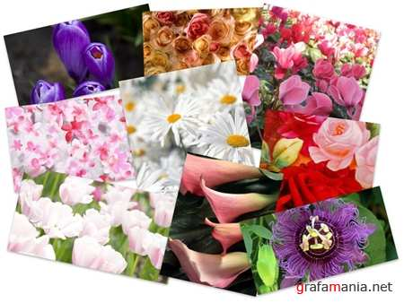 60 Amazing Colorful Flowers HQ Wallpapers