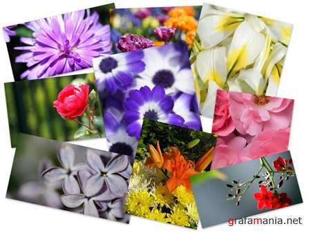 55 Excelent Colorful Flowers HD Wallpapers