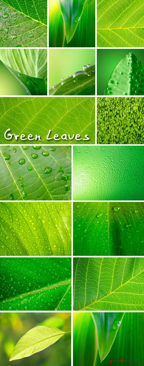 Stock Photo - Green Leaves 2