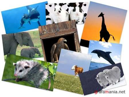 55 Best Amazing Animals HQ Wallpapers