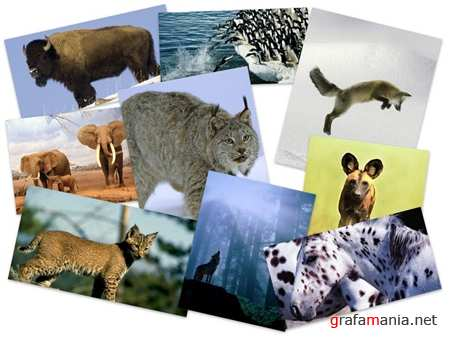55 Wonderful Best Animals HQ Wallpapers