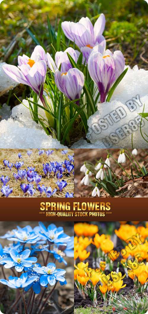 Stock Photo - Spring Flowers