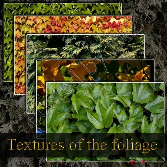 Textures of the foliage - �������� ������