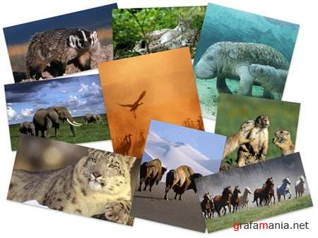35 Amazing Animals HQ Wallpapers