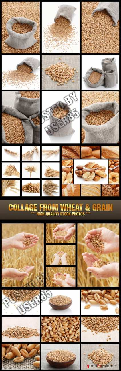 Stock Photo - Collage from Wheat & Grain