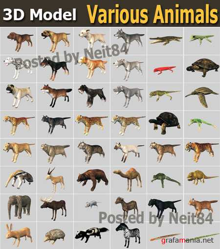 3D models of various Animals
